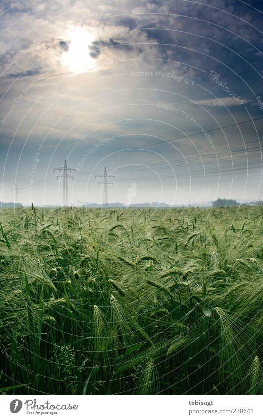 Sky Nature Green Sun Clouds Calm Spring Field Beautiful weather High voltage power line Ear of corn Environment