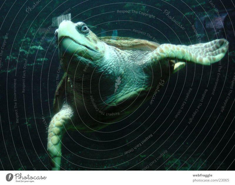 What are you looking at? Turtle Ocean Aquarium