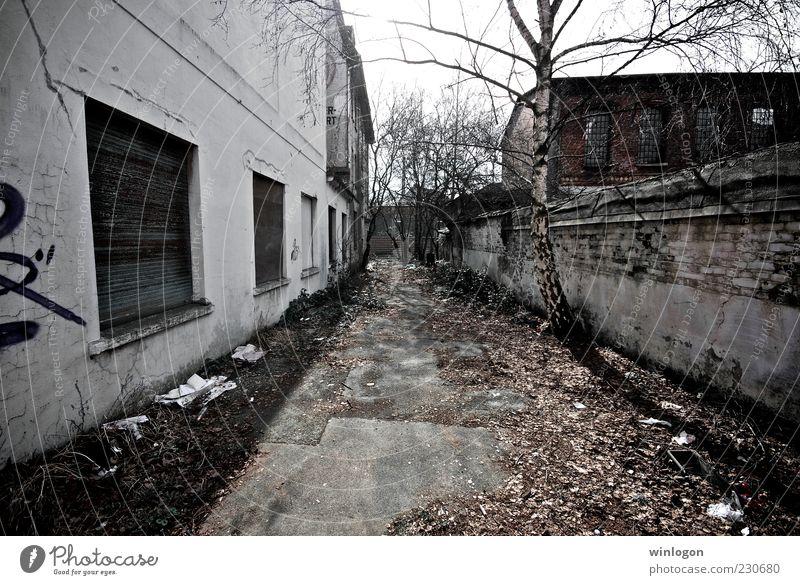 sin city Old Tree Black Environment Gray Earth Art Germany Dirty Poverty Gloomy Europe Industry Technology Media Ruin