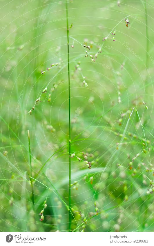 Nature Green Beautiful Plant Summer Calm Meadow Environment Grass Bright Natural Growth Beautiful weather Fragrance Foliage plant Spring fever