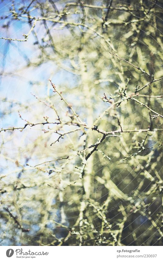 Plant Winter Autumn Spring Natural Bushes Beautiful weather Copy Space Branchage Foliage plant Sparse Twigs and branches Branched Leafless