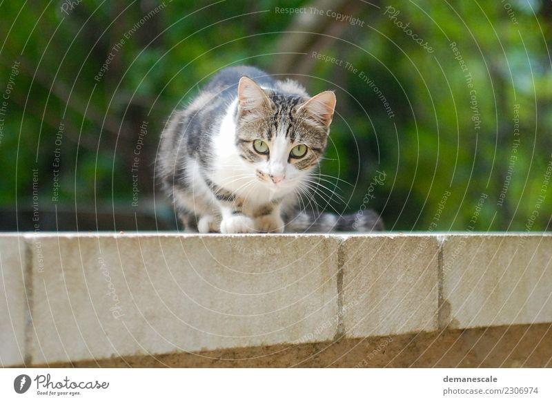 samtpfote Cat Nature Summer Green White Animal Black Yellow Playing Garden Gray Brown Contentment Jump Park Lie