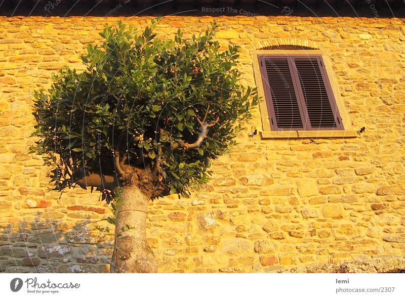 Tree House (Residential Structure) Moody Facade Europe Italy Dusk Tuscany Evening sun