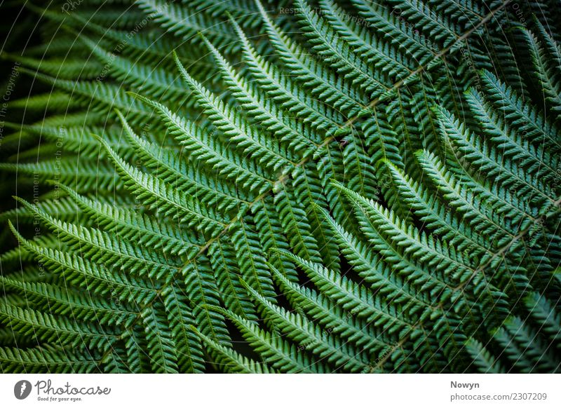 Green Fractal Fern Environment Nature Animal Plant Leaf Foliage plant Wild plant Far-off places Fresh Healthy Point Soft Yellow Black Happy Contentment