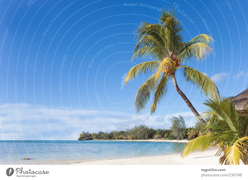 Mauritius Summer Sun Palm tree Beach Ocean Idyll Landscape Colour photo Copy Space left Travel photography Sky Considerable Beautiful Gorgeous Heavenly Nature