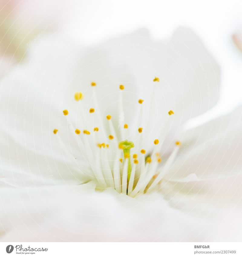 Nature Plant Beautiful White Flower Environment Blossom Spring Natural Contentment Bright Growth Esthetic Fresh Beginning Change