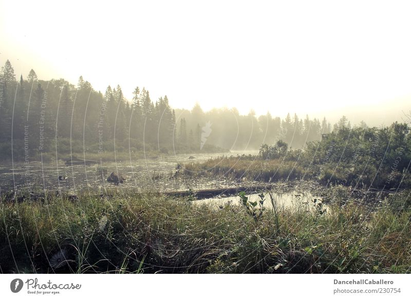 morning fog Summer Nature Landscape Plant Water Weather Fog Tree Forest Bog Marsh Pond Beautiful Calm Idyll Environment Dew Spider's web Morning Loneliness