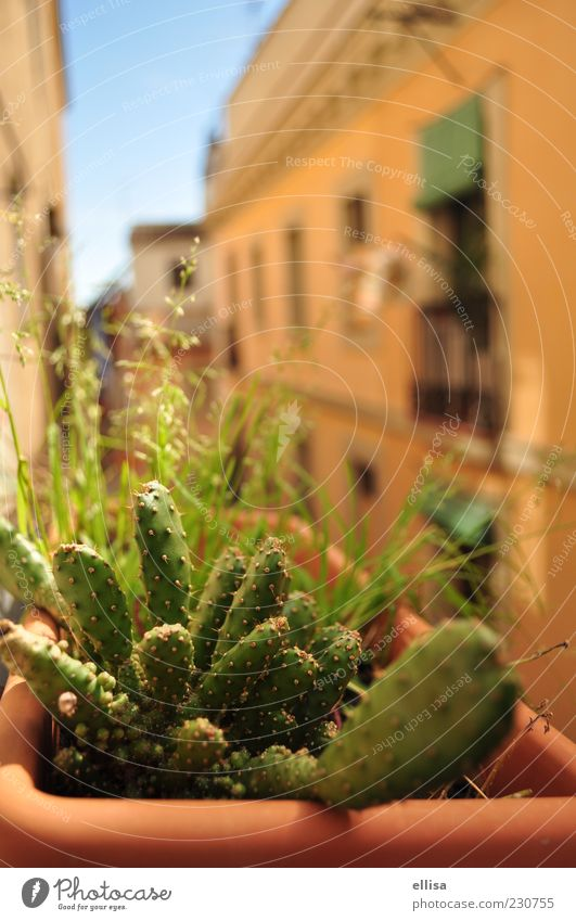Green Plant House (Residential Structure) Warmth Facade Balcony Blade of grass Cactus Mediterranean Foliage plant View from a window Terracotta Balcony plant Yellow-orange