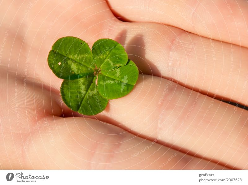 Four-leaf lucky cloverleaf in hand Clover Cloverleaf Hand Fingers Happy Four-leaved Ireland Green Plant Nature Popular belief Good luck charm