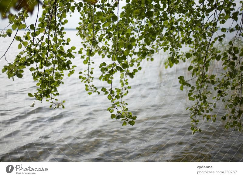 Nature Water Tree Summer Calm Leaf Loneliness Life Relaxation Freedom Lake Wind Environment Time Esthetic Uniqueness