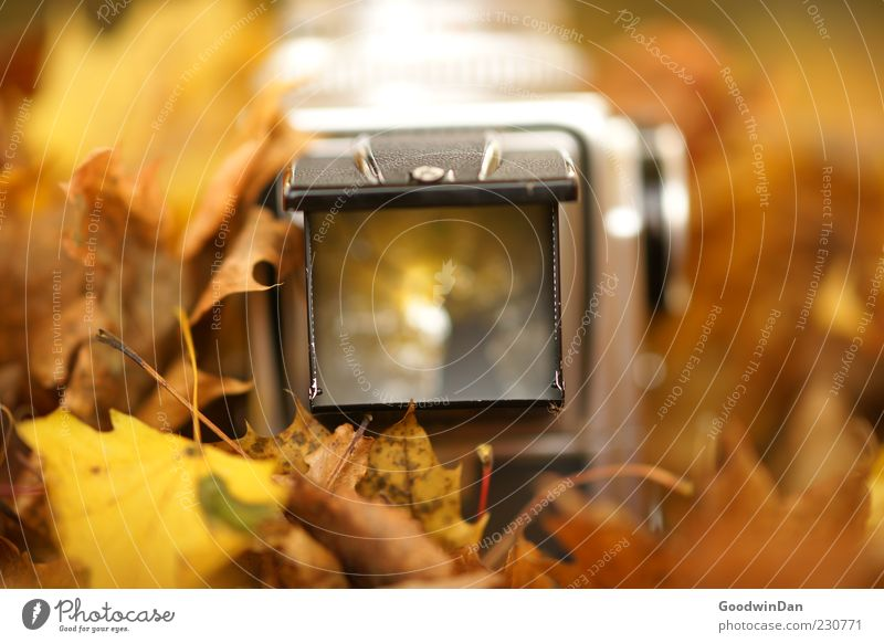 frames Environment Nature Autumn Weather Beautiful weather Leaf Park Camera Medium format Old Exceptional Authentic Simple Near Emotions Moody Colour photo
