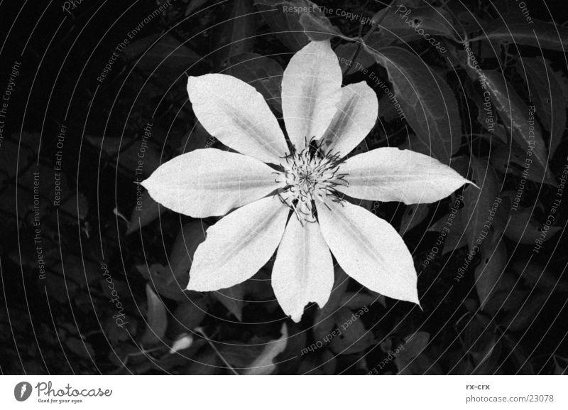 White Plant Black Blossom Garden Open