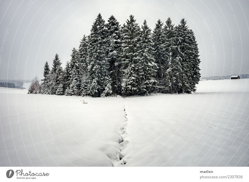 Black forest Nature Landscape Sky Clouds Horizon Winter Weather Ice Frost Snowfall Tree Hill Mountain Deserted Hut White Black Forest snowy Dig Exterior shot