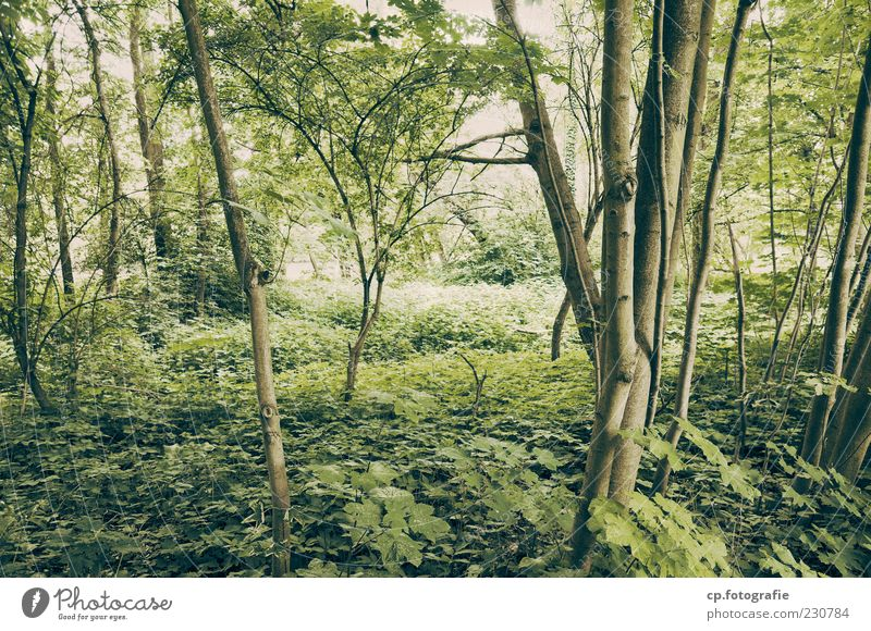 into the jungle Nature Plant Sunlight Summer Beautiful weather Tree Leaf Foliage plant Forest Natural Maple tree Colour photo Exterior shot Day