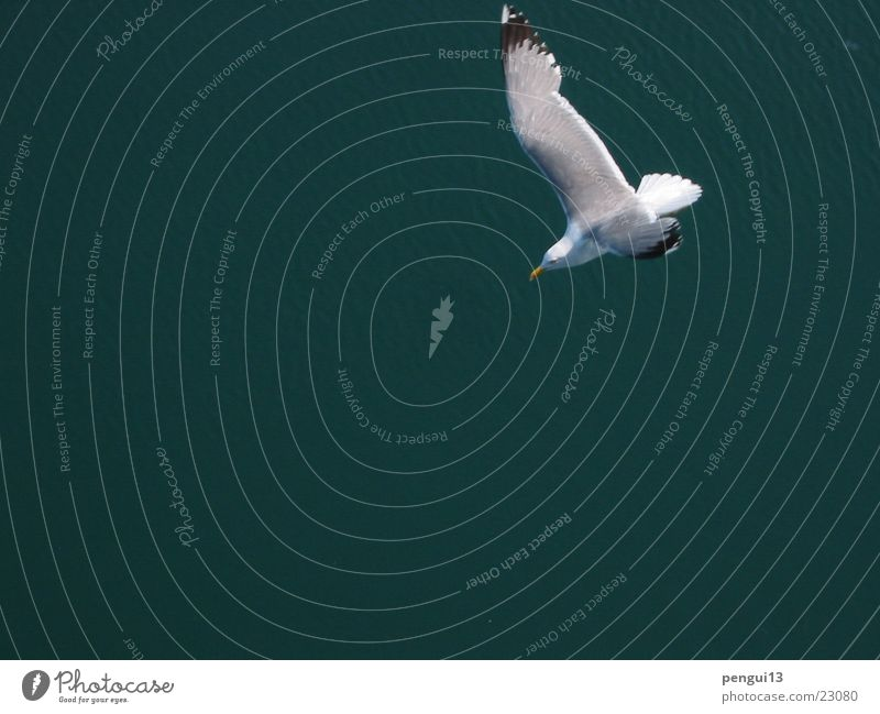Cajka01 Bird Transport Freedom Flying seagull