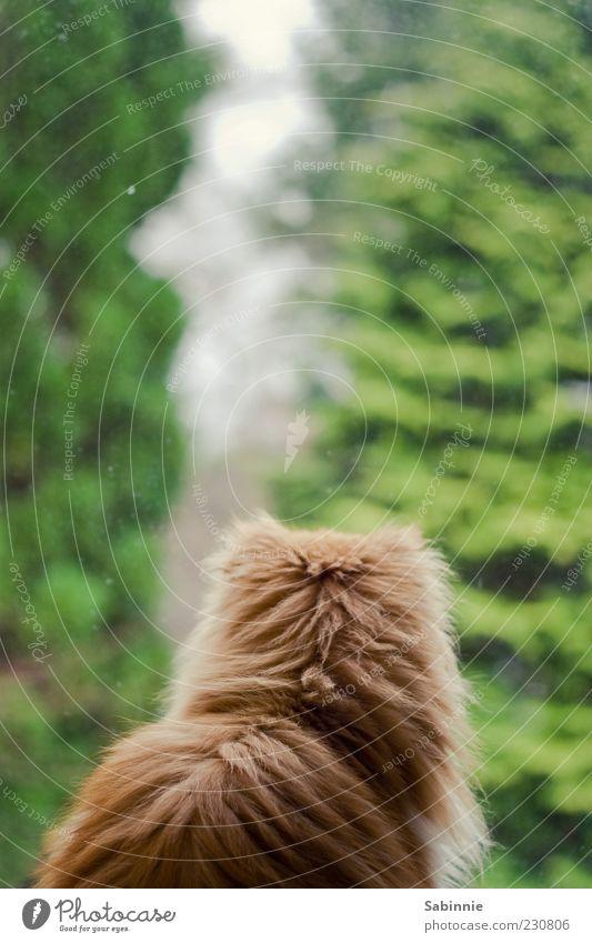 Cat Green Tree Calm Animal Window Sit Observe Pelt Vantage point Interest Pet Auburn Cat's head Persian cat