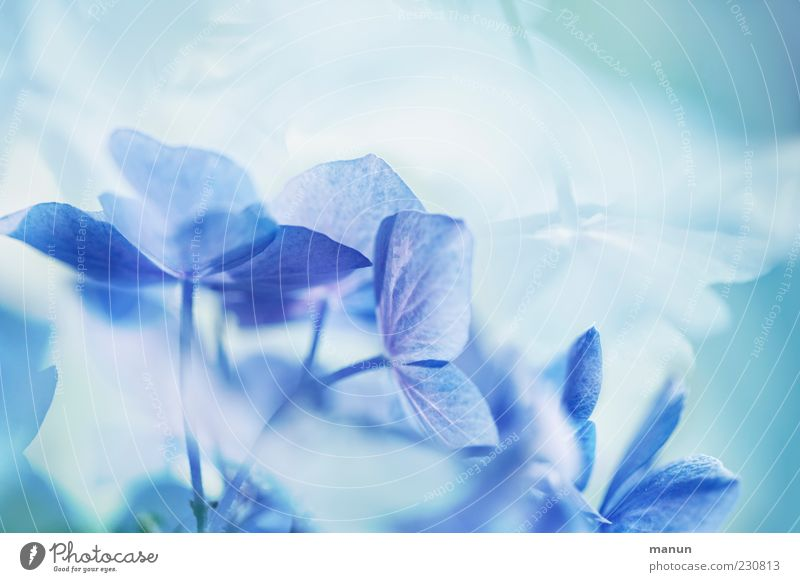 Nature Blue Beautiful Plant Flower Blossom Style Elegant Esthetic Exceptional Cool (slang) Kitsch Fantastic Turquoise Blossom leave Abstract