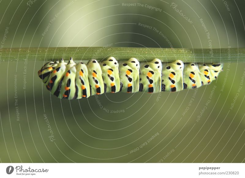 Nature Green Plant Animal Animal face Fat Stalk Hang To feed Hold Macro (Extreme close-up) Caterpillar Multicoloured