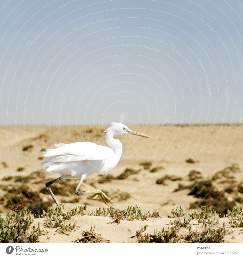 Sky Nature White Animal Sand Bird Brown Speed Political movements Desert Running Beak Blue sky Steppe Poultry Heron