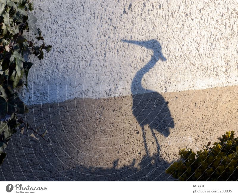 Faster than his shadow Animal Bird 1 Stand Funny Heron Shadow play Beak Garden Decoration Colour photo Exterior shot Deserted Silhouette Wall (building) Stork