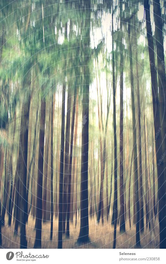 Nature Tree Plant Summer Forest Environment Weather Multiple Many Beautiful weather Tree trunk Blur Mirkwood