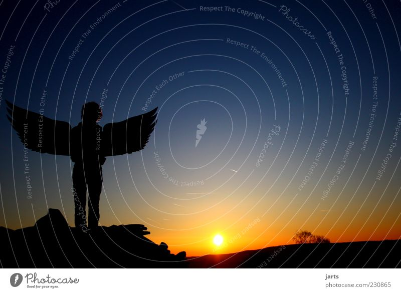 Human being Sky Nature Sun Calm Life Emotions Religion and faith Wait Hope Wing Angel Observe Protection Trust Fantastic