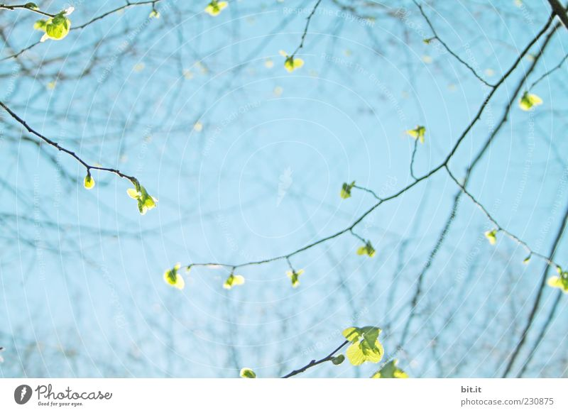 Sky Nature Blue Plant Green Summer Leaf Environment Spring Horizon Park Growth Fresh Copy Space Climate Blossoming