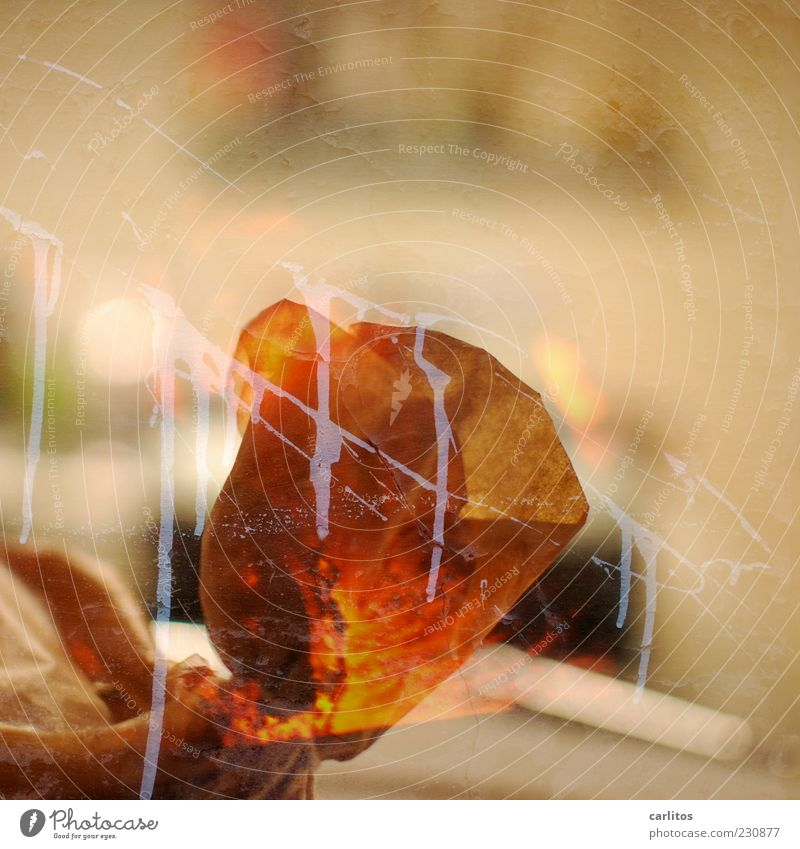 White Colour Orange Brown Background picture Walking Paper Double exposure Embers Futile Daub Hazy Greaseproof paper