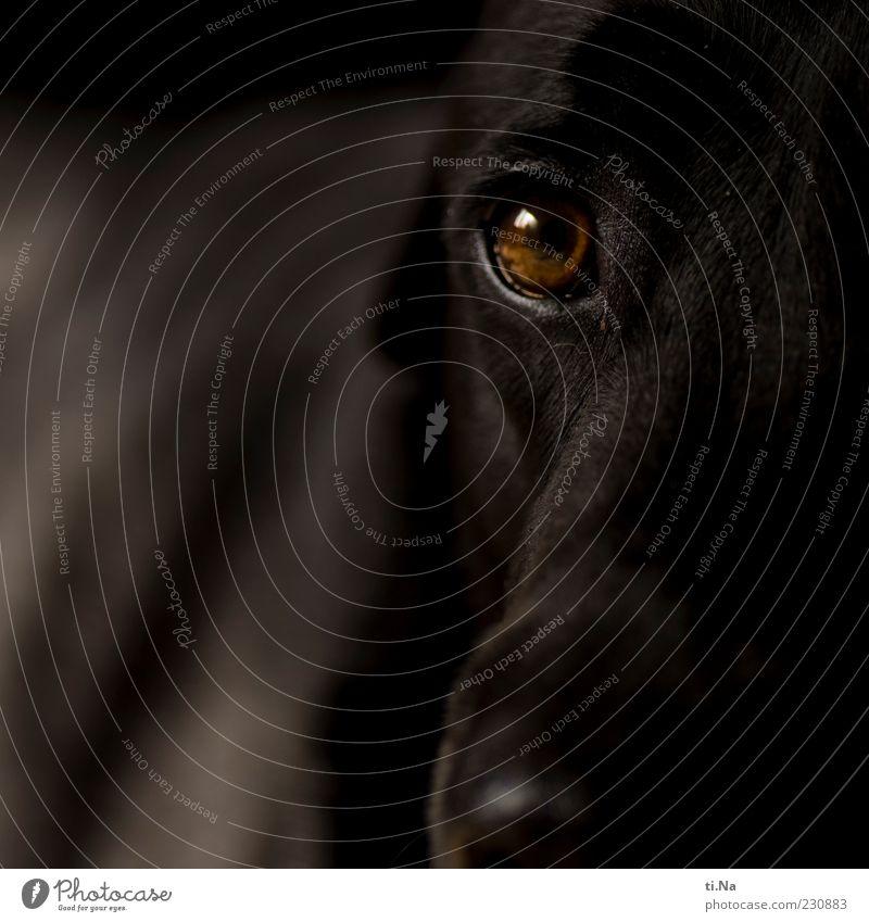 Dog Black Animal Brown Animal face Pelt Friendliness Trust Pet Loyalty Partially visible Labrador Love of animals Land-based carnivore Puppydog eyes