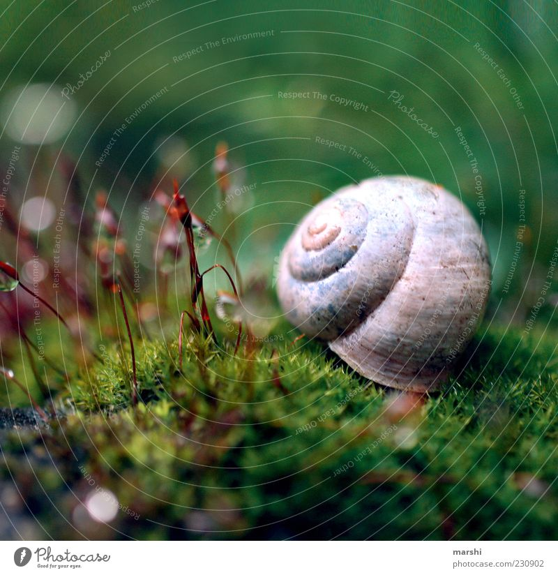 small enchanted world Nature Plant Moss Snail Small Green Blur Snail shell Exterior shot Close-up Detail Macro (Extreme close-up) Deserted 1 Copy Space top