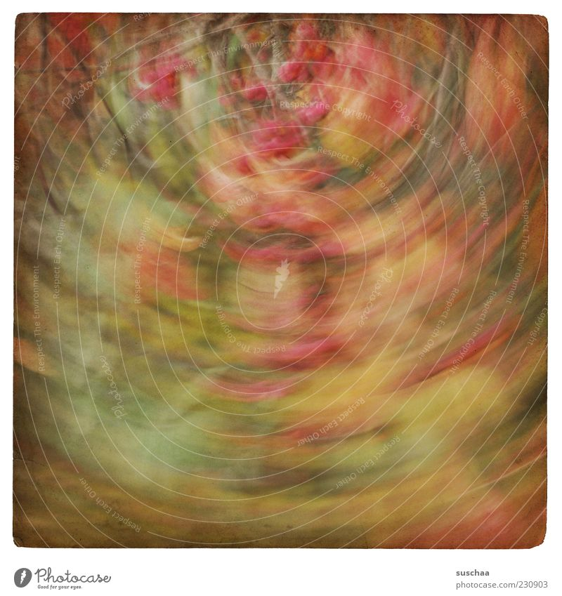 twisted world ... Environment Nature Plant Autumn Bushes Art Multicoloured Abstract Pattern Structures and shapes Deserted Motion blur Rotate Blur Autumnal