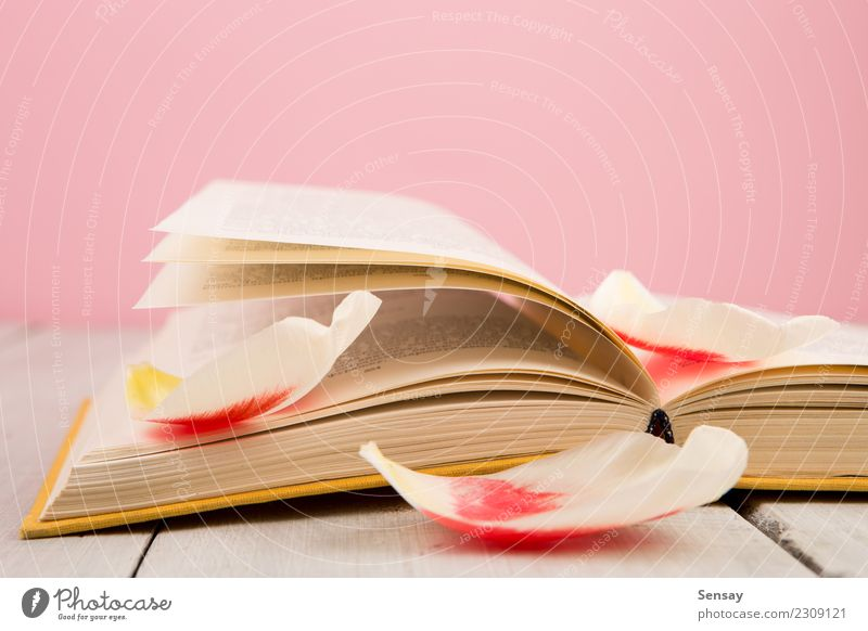 education and reading concept Old Flower Red Leaf Blossom Wood Business School Group Pink Copy Space Open Arrangement Table Study Book