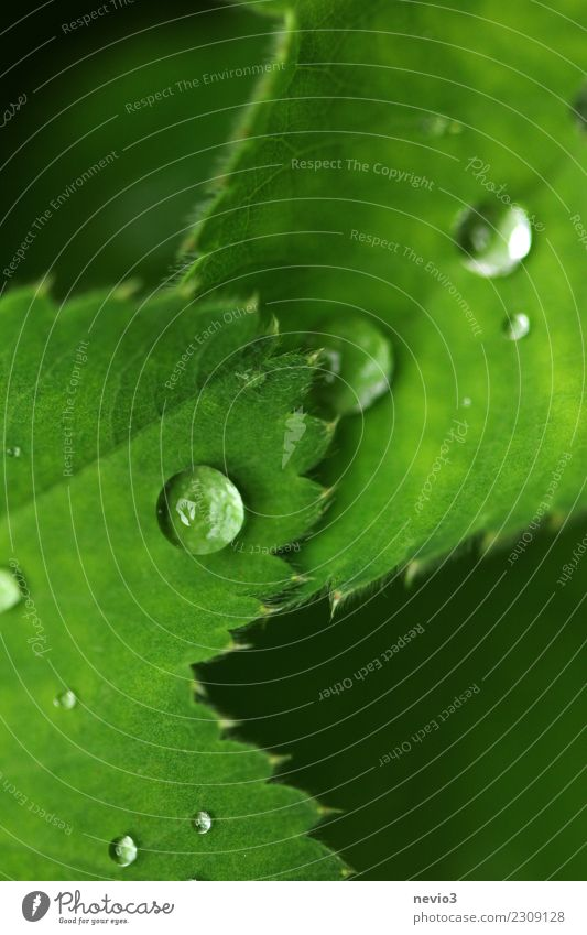 raindrops on green leaves Summer Nature Plant Grass Leaf Foliage plant Wild plant Pot plant Garden Park Meadow Green Drops of water Water Rain Dew Weather Wave