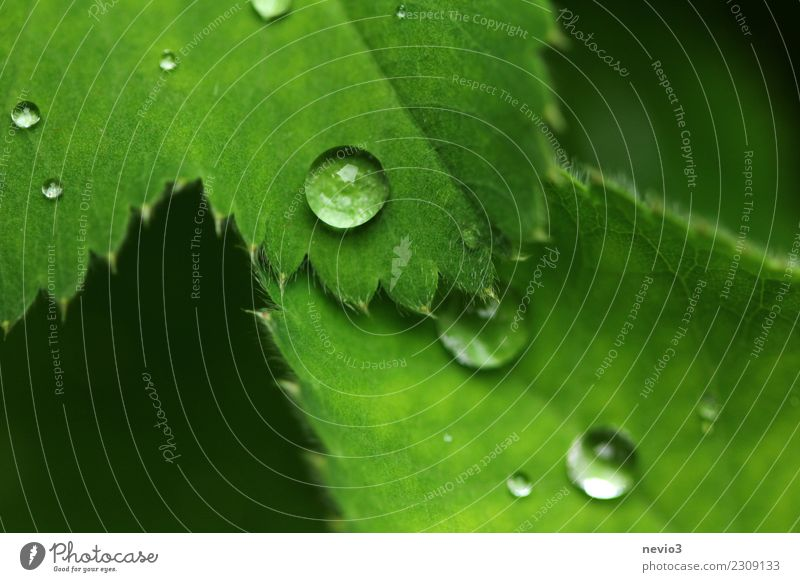 water pearls Summer Environment Nature Plant Spring Grass Leaf Foliage plant Agricultural crop Garden Park Meadow Green To leaf (through a book) Rain