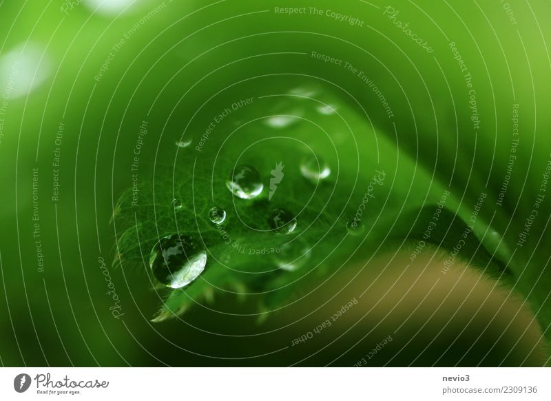 drops Summer Environment Nature Plant Spring Grass Leaf Foliage plant Garden Meadow Green Leaf green Drops of water Blur Macro (Extreme close-up) Grassland Fine