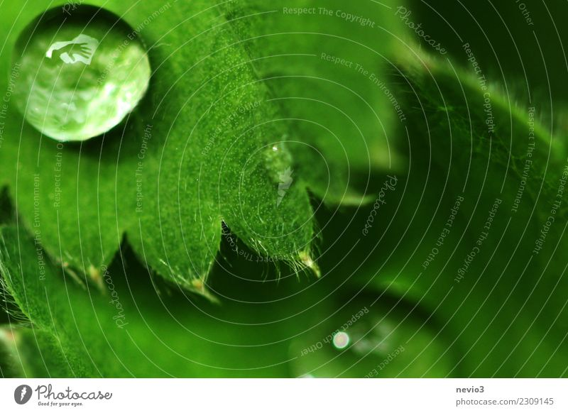 Waving hand in a drop of water Summer Environment Nature Plant Water Drops of water Spring Grass Leaf Foliage plant Agricultural crop Garden Park Meadow Round