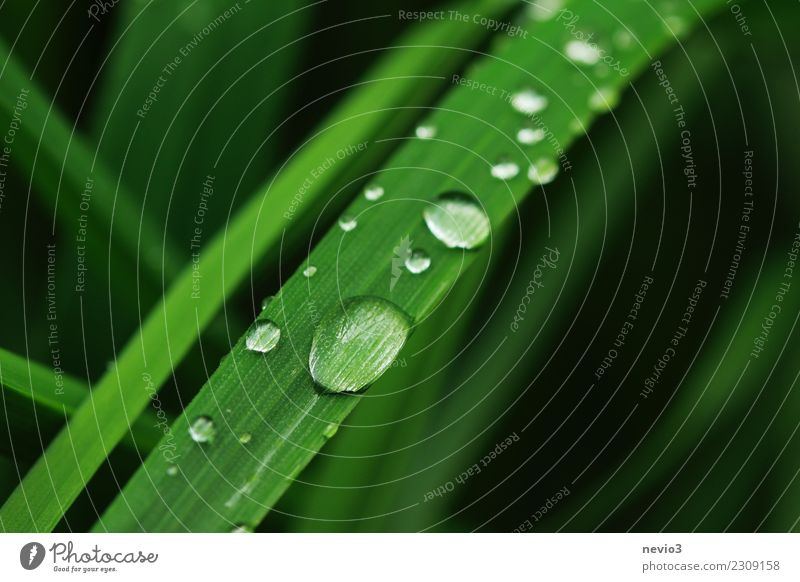 raindrop slide Summer Environment Nature Plant Spring Grass Leaf Foliage plant Agricultural crop Garden Meadow Round Green Beautiful Slide Drops of water Dew
