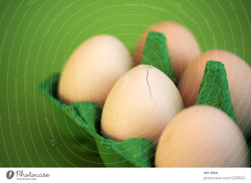 Green Food photograph Fresh Nutrition Broken Round Protection Organic produce Crack & Rip & Tear Egg Still Life Destruction Hard Sheath Fragile