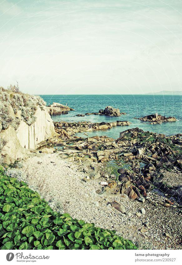 coastal Nature Landscape Plant Rock Coast Ocean Ireland Northern Ireland Environment Pebble beach Great Britain Colour photo Exterior shot Deserted