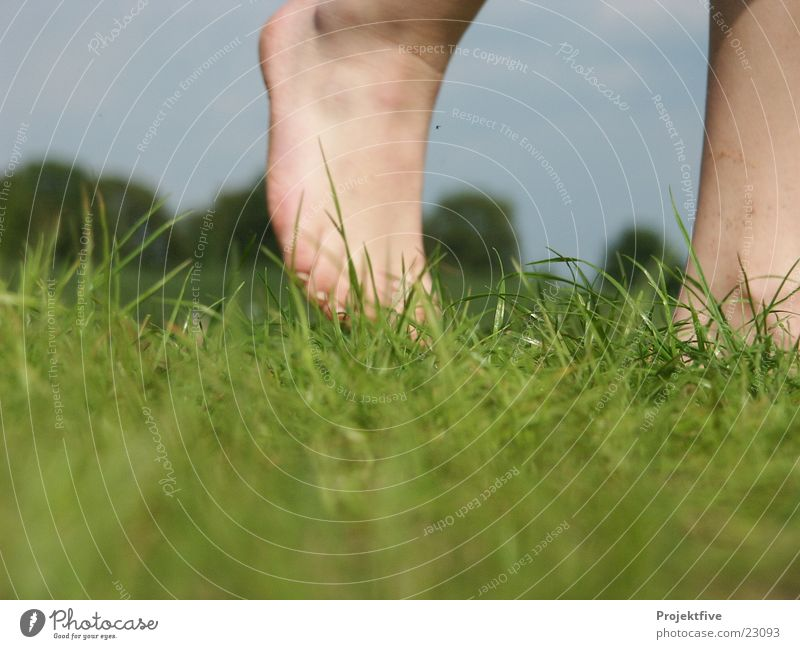 Human being Sky Nature Blue Green Tree Joy Grass Feet Going Floor covering Grass surface Barefoot Bleak Joint Ankle