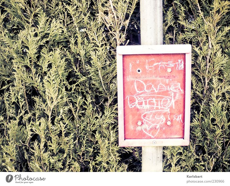 timetable change. Lifestyle Nature Plant Bushes Foliage plant Thuja Public transit Metal Plastic Sign Characters Signs and labeling Red Movement Kitsch Bus stop