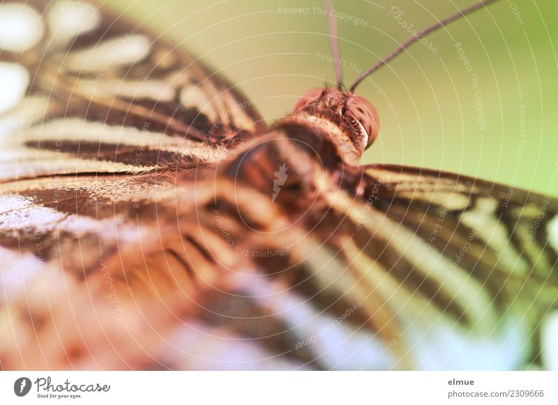 unfolded (3) Animal Spring Tropical greenhouse Tropical garden Butterfly Wing Feeler Compound eye Pattern Elegant Beautiful Uniqueness Small Happy Happiness