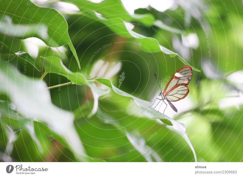 delicately inspired Spring Leaf Foliage plant Butterfly glass winged aircraft Tropical greenhouse Butterfly house Elegant Bright Beautiful Uniqueness Small Cute