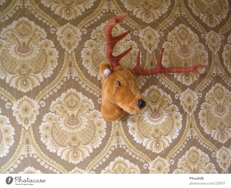 House (Residential Structure) Wall (barrier) Reindeer