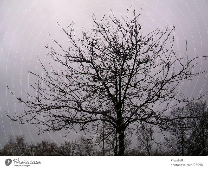 Nature Tree Winter Autumn