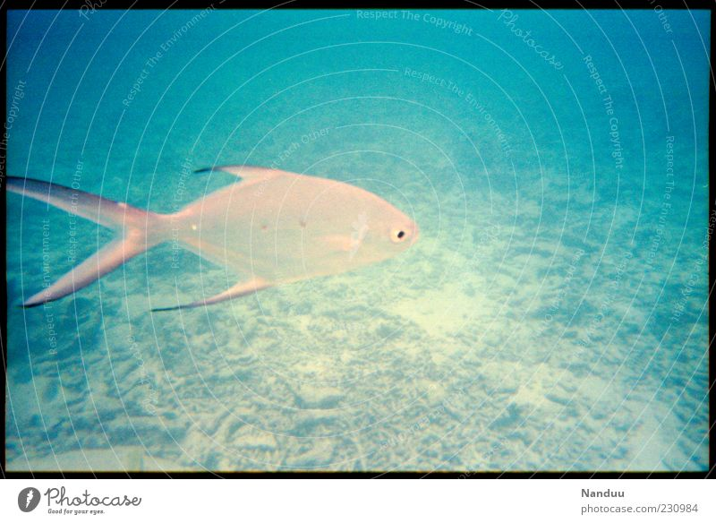 Nature Blue Ocean Summer Animal Environment Swimming & Bathing Wild animal Esthetic Fish Individual Dive Analog Reef Tropical Seychelles