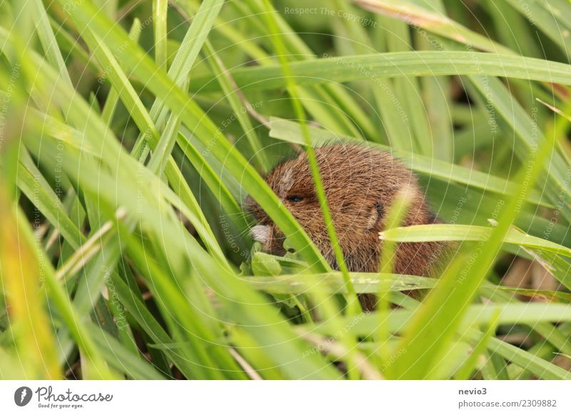 Small mouse gnawing at green leaf Environment Nature Plant Animal Spring Summer Grass Leaf Foliage plant Agricultural crop Garden Meadow Field Pet Farm animal