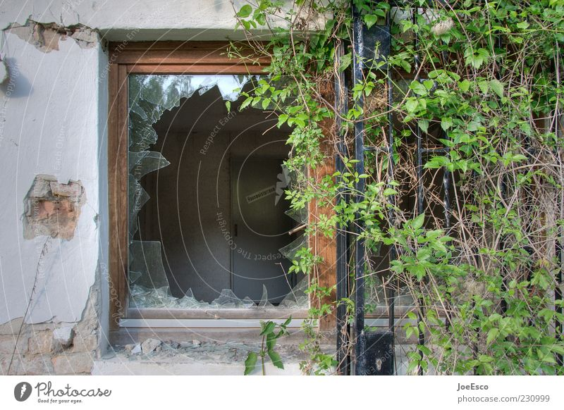 #230999 Deserted Ruin Facade Dirty Broken Apocalyptic sentiment Window Shard Window frame Window pane Overgrown Shatter glass break Plant Colour photo