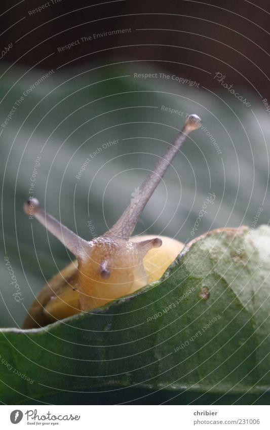 Nature Green Plant Leaf Eyes Animal Yellow Environment Near Soft Observe Cute Snail Senses Feeler
