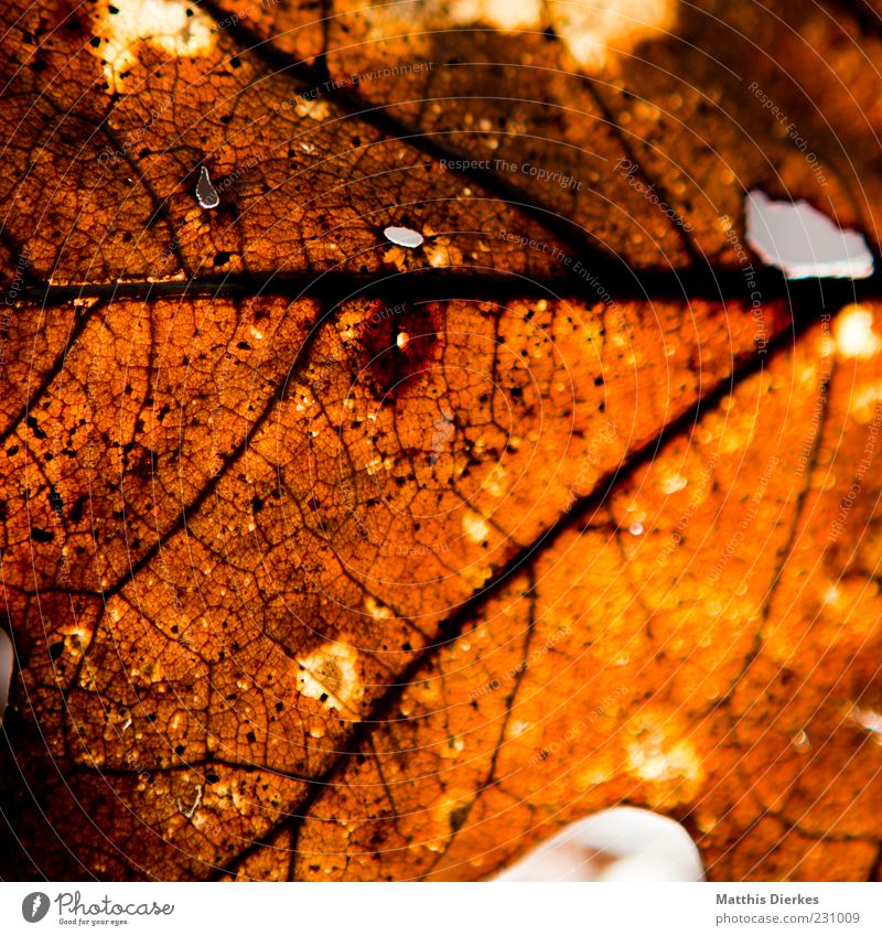 Nature Old Leaf Yellow Autumn Brown Dirty Environment Gold Gloomy Authentic Broken Change Transience Exceptional Trashy